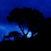 le_grenade userpic