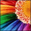 Rainbow Flowe