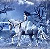 unicorn winter