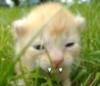 fanged kitten
