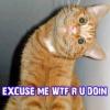 orange cat wtf