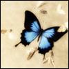 Butterfly: Blue
