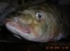 рыбка-2