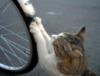 bikewheel, cat