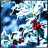 Nature - Frosted Holly