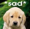 Sad - Puppy