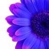 kdaisy721 userpic