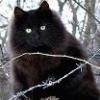 ышшо один готичный кот