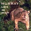 donutsweeper: Murray
