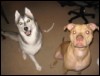 Both pups