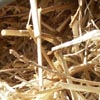 Straw Close-up