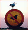 gull on sign