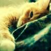 misc » kitty
