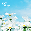 Field of Daisies w/ heart