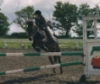 willow jumping
