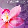 Orchideous