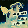 Angel: Random: dogs are angels with fur