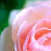 ilovechocolates: thankful kame