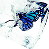 Stephanie: frozen butterfly