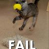 fail - cat toy