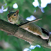 squirrel_child userpic