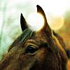 [Horses] Ears Up