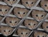 Ceiling Cat Honeycomb