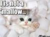 sweetallycat userpic