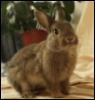 sister_rabbit userpic