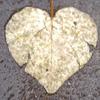 somanyroses userpic
