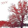 холодно и деревья