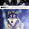lady_supernova: wolf