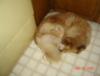dixieissleeping userpic