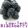 seftiri: Blackberry