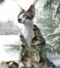 nake cat