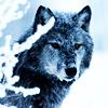azurewolf7