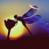 arabian_proverb: Fairies
