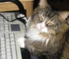 Dravenhappycat