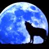 animals: wolf