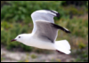 seagull_flash userpic