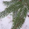 winterforest42 userpic