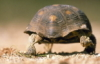seaturtle1 userpic