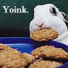 Bunny Yoink