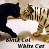 Abbie Strehlow: Black Cat White Cat