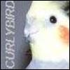 Curlybird