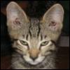 paduan userpic