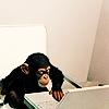 Bee: Chimp at laptop