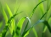 grassy_liqueur userpic