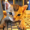 kittenonthekeys userpic