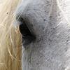 Ruairí MacEibhir: Horse Eye